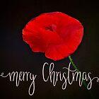 « Joyeux Noël - fleur de pavot » par amor-vinces