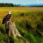 Eagle in the Field by Kathy Weaver