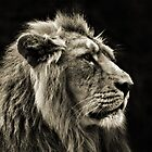 Asiatic Lion SC by Yampimon