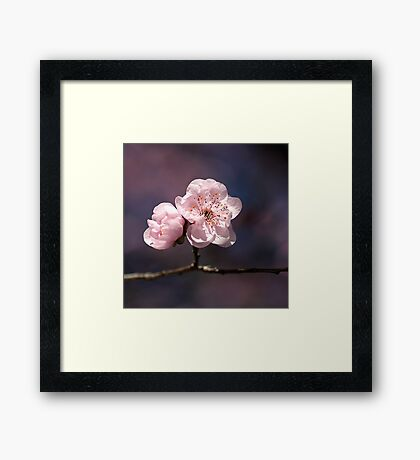 Blossom of PINK Framed Print