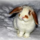 Snow Bunny by Bine
