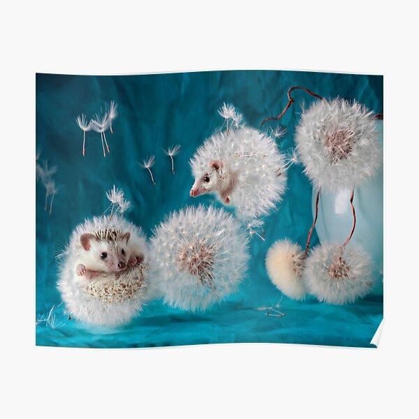 Hedgehogs- dandelions. Photographer Eremina Elena. Poster