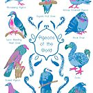 Pigeons of the World! by katiewhittle