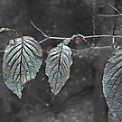 Glass Leaves by Eileen McVey