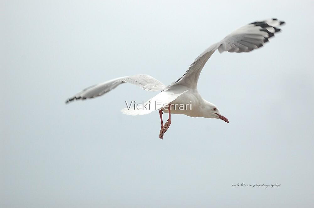 Gull In Flight © by Vicki Ferrari