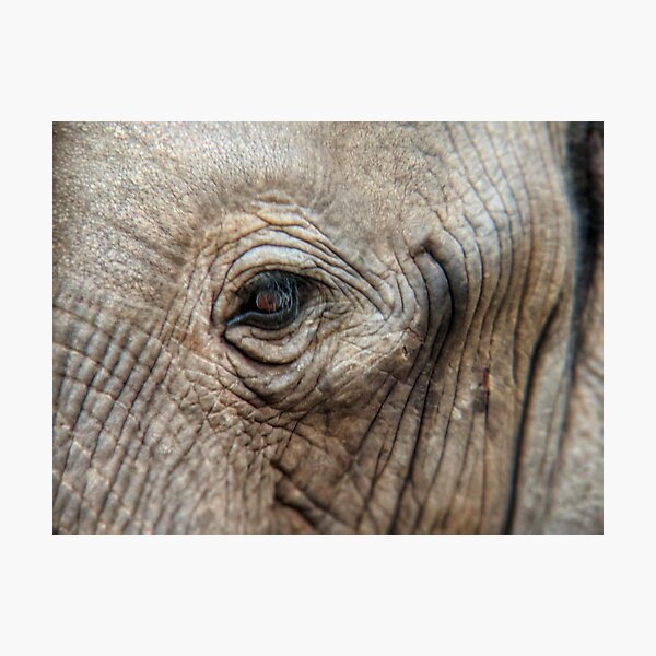Closeup of African elephant eye Photographic Print
