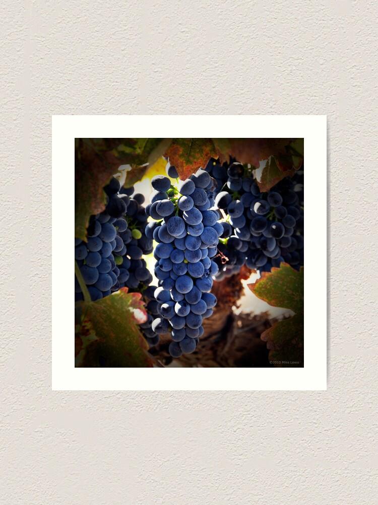 Alternate view of Grapes Art Print