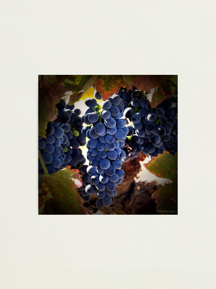 Alternate view of Grapes Photographic Print