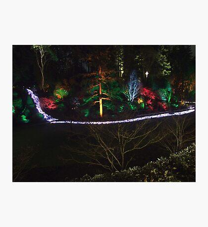 Night in the Sunken Garden (7) Photographic Print