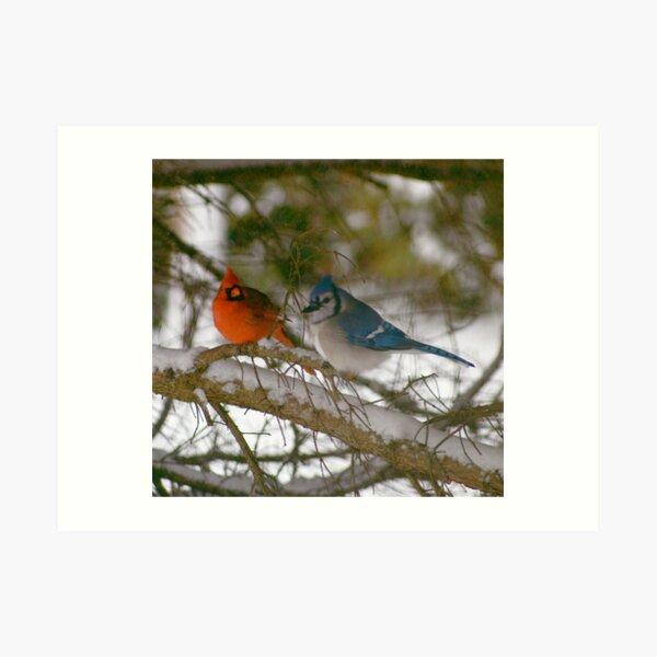 Winter Birds Art Print