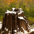Old Tree Stump by Nickolay Stanev