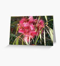 Eucalyptus sideroxylon Rosea. Greeting Card