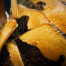 Wasp Study 1 by Marloag