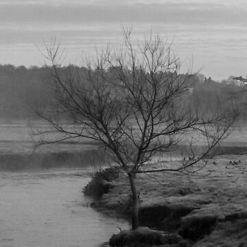 Tree On Bank Of River Axe by widdy170