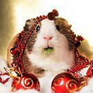 Xmas Guinea Pig by Matty723