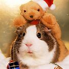 Xmas Guinea Pig 2 by Matty723