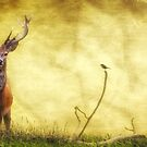 Stag and Friend by David Drummond