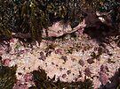 """Pink Rock Garden"" by debsphotos"