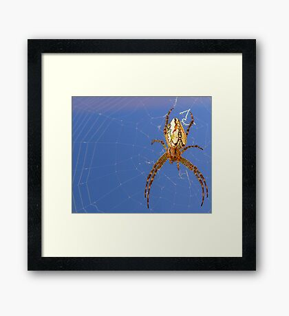 Spider spider burning bright....... Framed Print