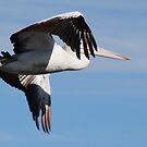 Peek-a-boo Pelican by Graham Mewburn
