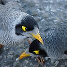 yellow eyed bird by cawh