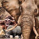 """EIN COLLAGE AFRIKAS """"BIG 5"""" - von Magriet Meintjes"""