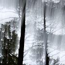 Sunlight & Pines by Lynn Wiles