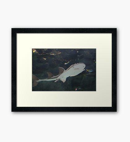 Low Flying Shark Framed Print