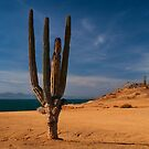 Cactus Row by Richard G Witham