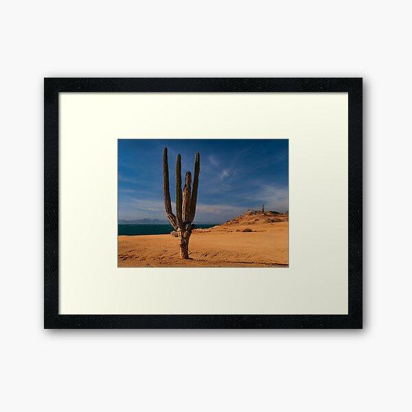 Cactus Row Framed Art Print