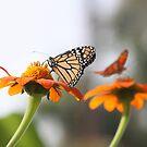 Butterfly Cafe by Olivia Plasencia