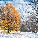 Winter Landscape Photography | Tree with Yellow Leaves Standing in Snow by Thubakabra