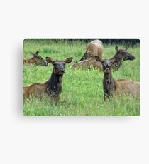 You Tell'm Sister, Those Paparazzi Just Make Me Sick! Canvas Print