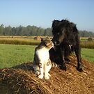 Best Buddies Dog and Cat by NiftyGaloot