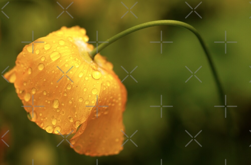 Drooping Yellow by EventHorizon