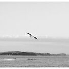 Lonely seagull by Alexey Dubrovin