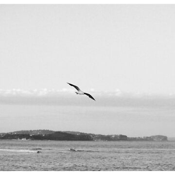 Lonely seagull by AlexDu