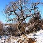 A Cool Tree Standing in the Village of Barda, Romania by Dennis Melling