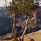The Grand Canyon South Rim Series - Maricopa Point - Through The Trees - 2 ©  by © Hany G. Jadaa © Prince John Photography