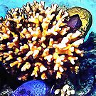 Fish and Coral Cluster 2 by Dorothy Berry-Lound