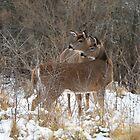 Autumn Deer by Jim Cumming