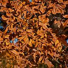 Leaves on a Tree just before they fall by TJ Baccari Photography