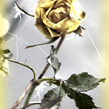 Withered Yellow Rose by angel1