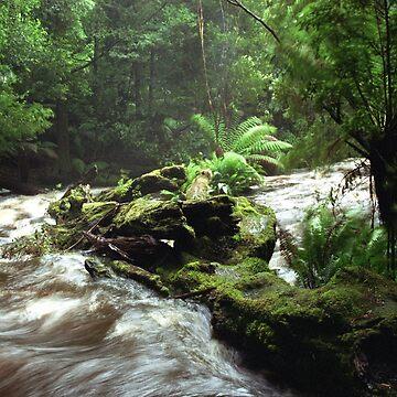 Below Russell Falls - Tasmania by Mytmoss