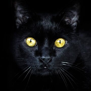 Black cat by fourretout