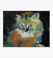 Himalayan Cat Photographic Print