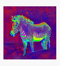 neon zebra Photographic Print
