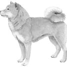 Shiba Inu by doggyshop