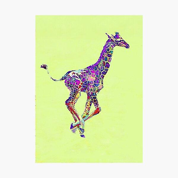 colorful baby giraffe Photographic Print