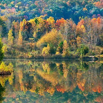 Fall Kaleidoscope by rollosphotos
